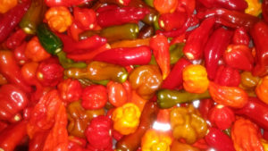 Stage 2: Processing of the Peppers